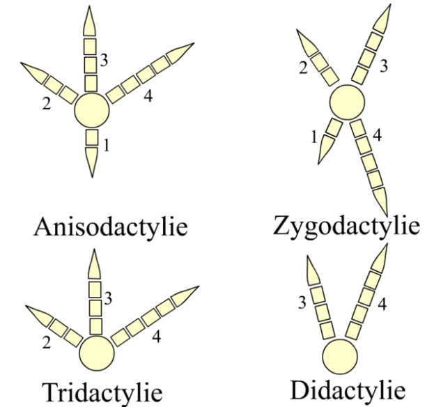 Jenis kaki burung (wikipedia.org)